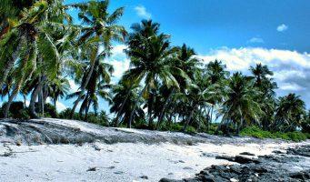 plage d'une île des Maldives et cocotiers