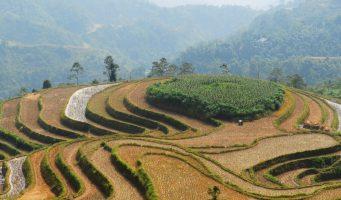 rizières au Nord du Vietnam